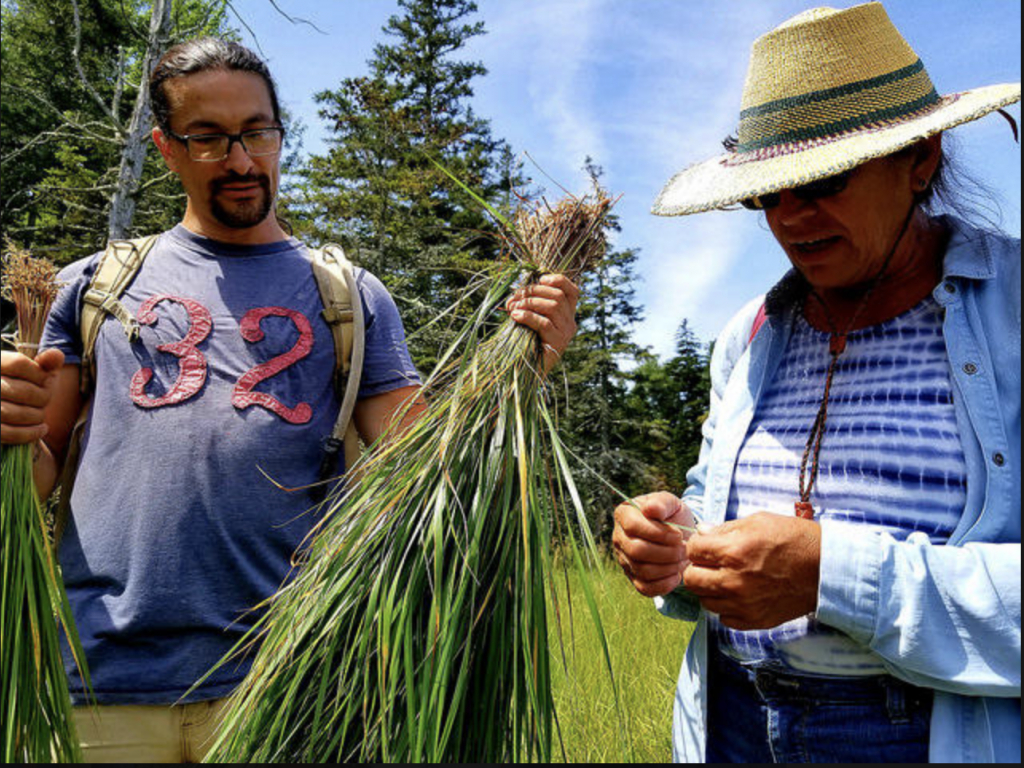 Wabanaki Basketmakers Want To Show That Harvesting Sweetgrass Can Be Sustainable